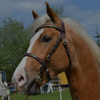 Bolsterstone Bespoke Bridles - by Jess Clancy